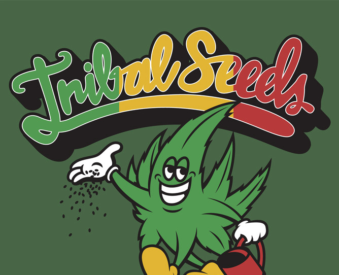 Tribal Seeds Live Review | Jannus Live, St. Petersburg, Fl ...