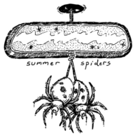Summer Spiders Band Florida